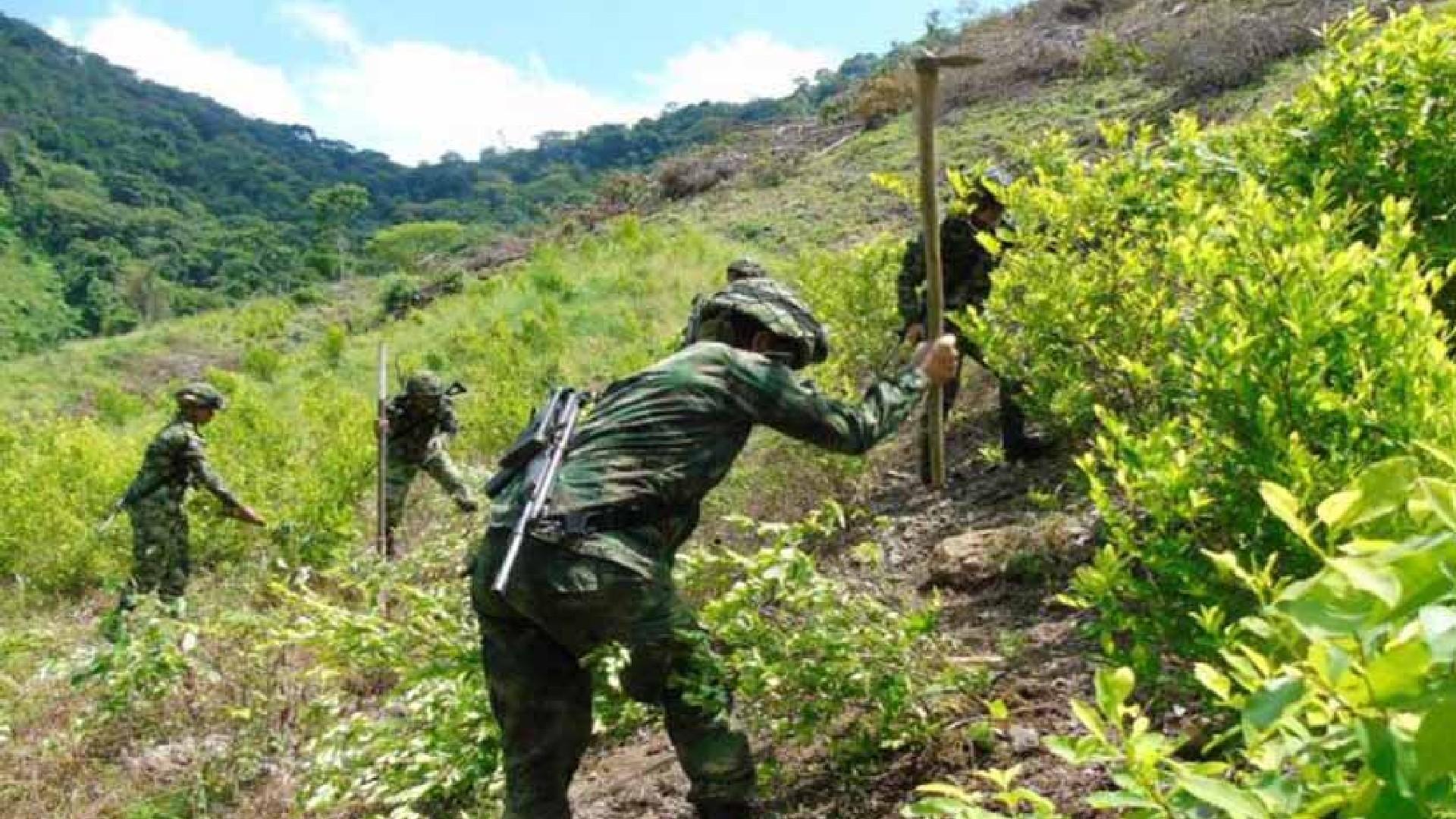 Que pena! Colombia aporta la mayor cantidad de cocaína 🤑
